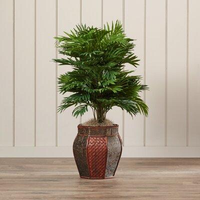 Areca Palm Floor Plant with Decorative Vase