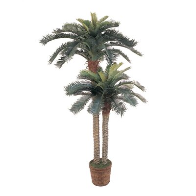 Palm Double Potted Tree in Basket