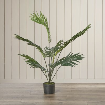 Kentia Palm Tree in Pot Size: 48 H