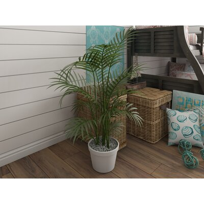 Kentia Palm Tree in Pot Size: 60 H