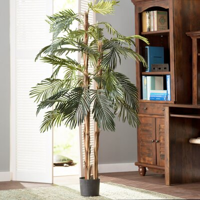 Robellini Palm Tree in Pot Size: 72 H