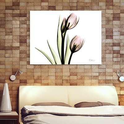 'Tulip Love H37' Graphic Art Print on Wrapped Canvas Size: 12