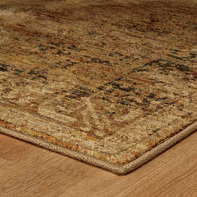Dajane Distressed Brown Area Rug Rug Size: 52 x 76