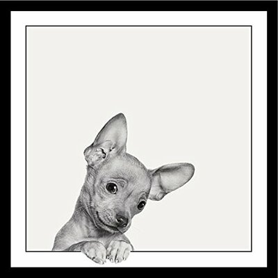 'Sweet Chihuahua Dog-Cute Puppy Looking at You' Framed Graphic Art Print Poster