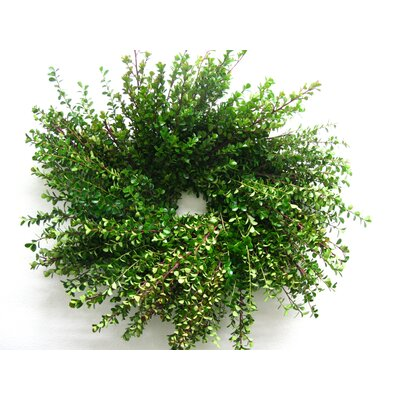 "18"" Boxwood Wreath wboxwr"