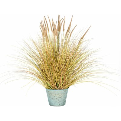 Dogtail Grass Bush in Round Metal Pot