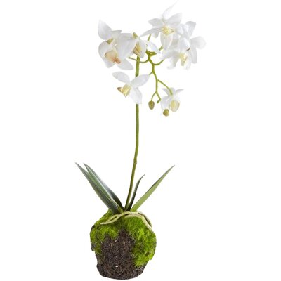 Dendrobium Drop-In (Set of 2)