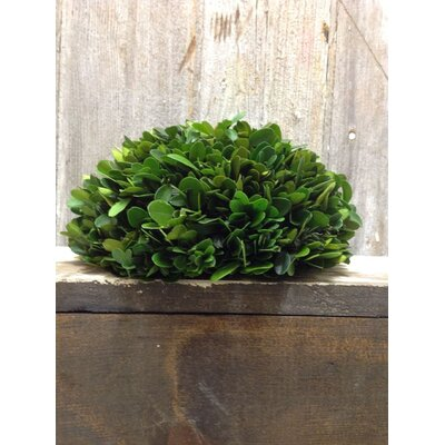 Boxwood Half Ball