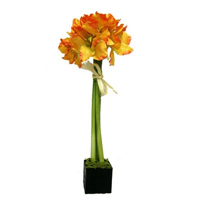 Amaryllis Lily Topiary Planter