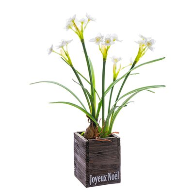 Faux White Narcissus HLDY3483 32575269