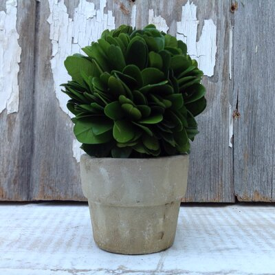 Boxwood Mini Topiary in Pot (Set of 4)
