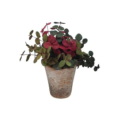 Eucalyptus Potted Shades of Fall Plant (Set of 2)