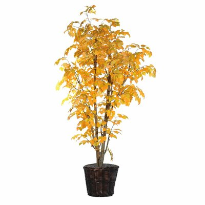 Executive Yellow Aspen Tree in Basket