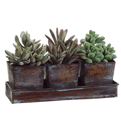 3 Piece Desktop Plant Long Tree Pot with Tray Set