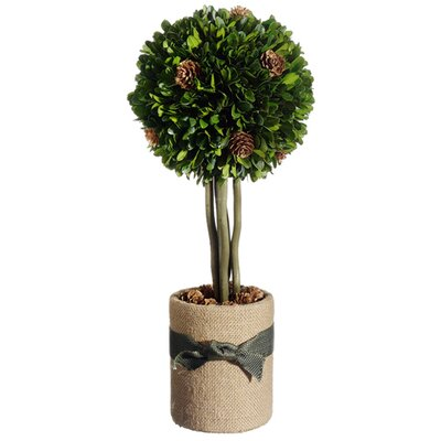Preserved Boxwood Pine Cone Ball Topiary in Pot