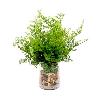 Fresh Fern in Vase