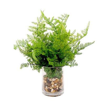 Desktop Fern in Vase