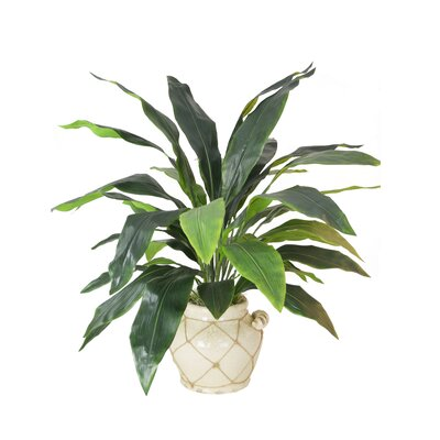 Aspidistra Floor Plant in Planter