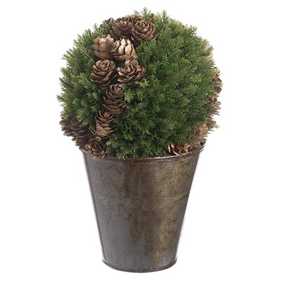 Cedar and Cone Ball Topiary in Pot