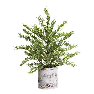 Pine Tree in Pot