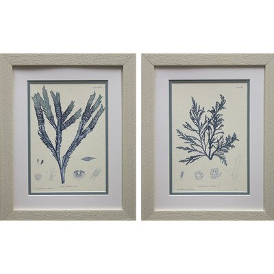Nature Print I & III by Vision Studio 2 Piece Framed Graphic Art Set FA114129
