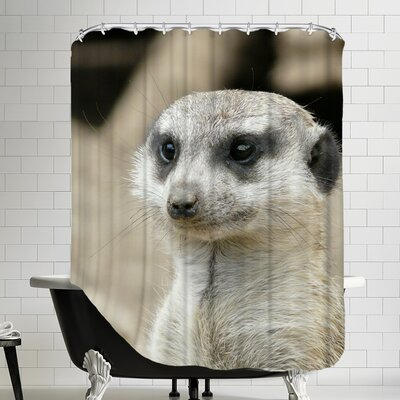 Meerkat Mammal Africa Animal Shower Curtain