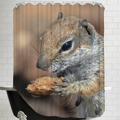 Squirrel Mammal Animal Shower Curtain