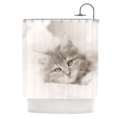 Main Coon Kitten by Monika Strigel Cat Shower Curtain