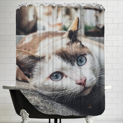 Antique Colors of Cat Shower Curtain