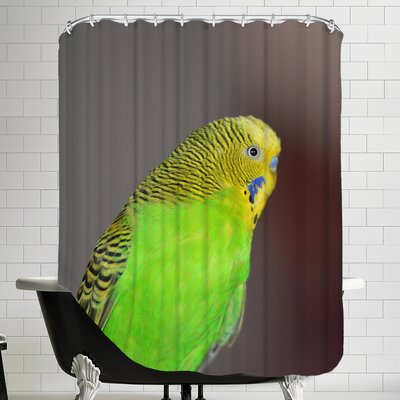 Budgie Bird Parrot Shower Curtain