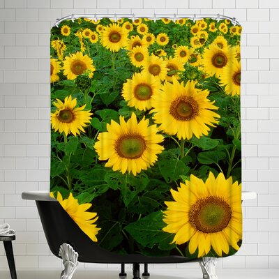 Sunflower Blossom Field Shower Curtain
