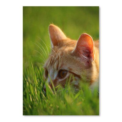 'Red Cute Cat in The Nature' Photographic Print