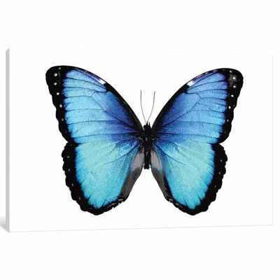 'Vibrant Butterfly II' Painting Print on Canvas ESUR9569 37482138