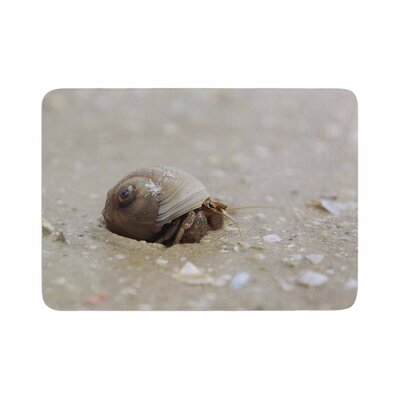 Angie Turner Hermit Crab Photography Memory Foam Bath Rug Size: 0.5 H x 17 W x 24 D