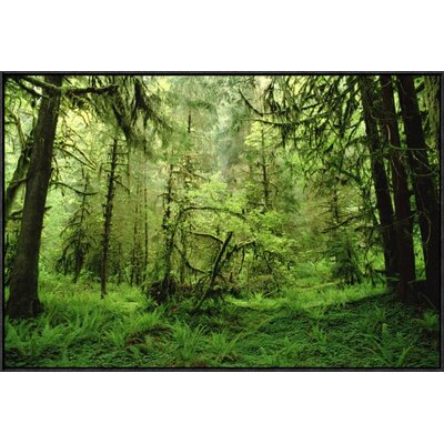 'Rainforest' Framed Photographic Print on Canvas URBH3679 38219163