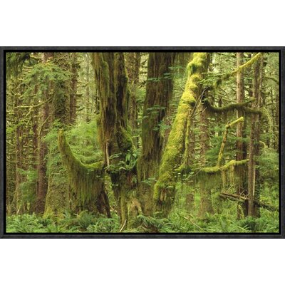 'Temperate Rainforest' Framed Photographic Print on Canvas URBH5418 38226056