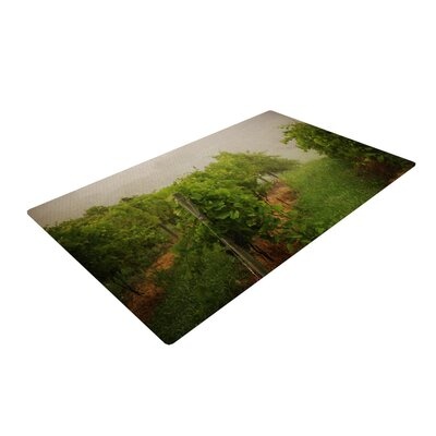 Angie Turner Grape Vines Foggy Green Area Rug Rug Size: 2 x 3