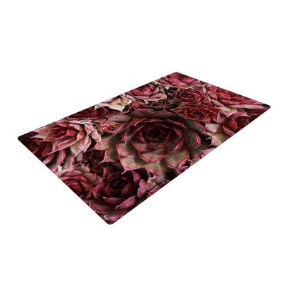 Debbra Obertanec Red Succulents Maroon Red Area Rug Rug Size: 2 x 3