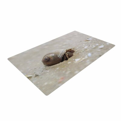 Angie Turner Hermit Crab Photography Brown Area Rug