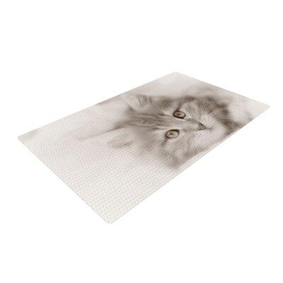 Monika Strigel Main Coon Kitten Cat Gray Area Rug