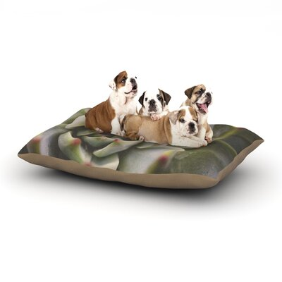 Debbra Obertanec Desert Succulent Dog Pillow with Fleece Cozy Top Size: Large (50 W x 40 D x 8 H)