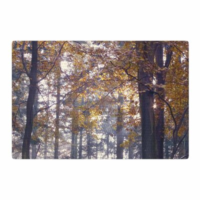 Alison Coxon Autumn Sunbeams Trees Photography Yellow/Brown Area Rug Rug Size: 2 x 3