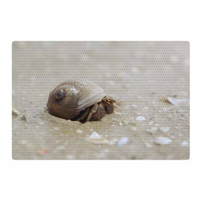 Angie Turner Hermit Crab Photography Brown Area Rug Rug Size: 2 x 3