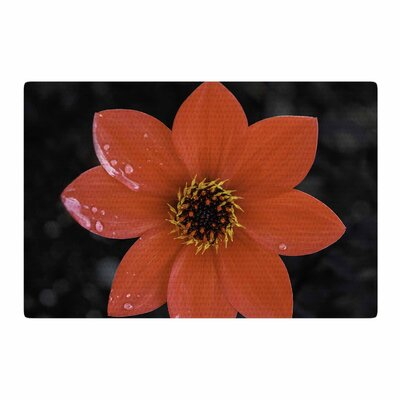 Nick Nareshni Wet Flower Petals Red/Black Area Rug Rug Size: 2 x 3