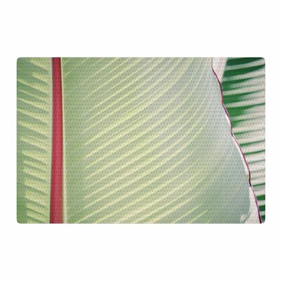 Ann Barnes Sage Photography Green/Red Area Rug Rug Size: 2 x 3