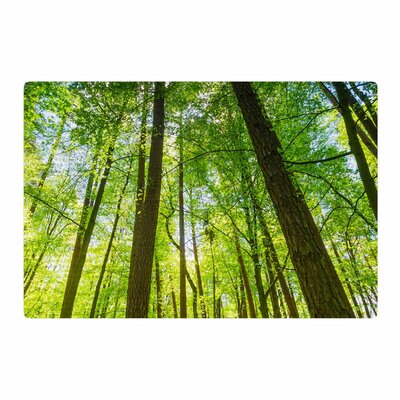 Susan Sanders Tree Sky Photography Green/Brown Area Rug Rug Size: 2 x 3
