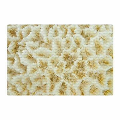 Susan Sanders Photography Ocean Beach Coral/Beige Area Rug Rug Size: 2 x 3