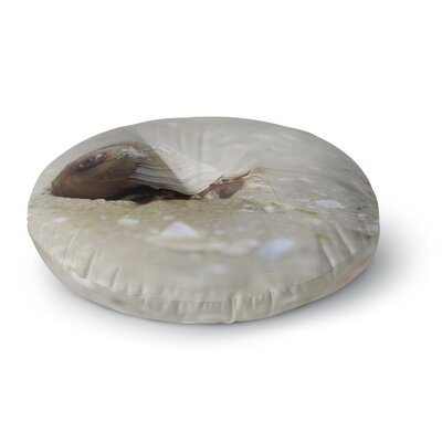 Angie Turner Hermit Crab Photography Round Floor Pillow Size: 26 x 26