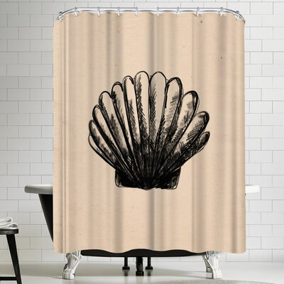 Jetty Printables Illustrated Sea Shell 3 Shower Curtain