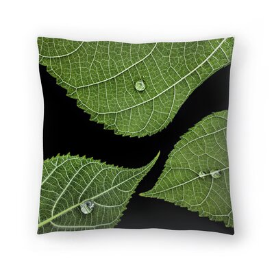 Maja Hrnjak Drops Throw Pillow Size: 18 x 18